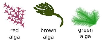 image of different types of algae